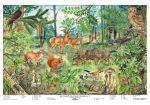 Az erdő életközössége  + ajándék 10 db munkalap