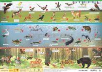 Magyarország vadon élő állatai