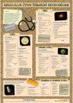 Nemi betegségek 3. (bakteriális fertőzések) - fali oktatótabló