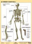 Az emberi csontváz I. DUO