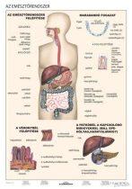 Emésztés és egészséges táplálkozás DUO