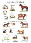 Ház körül élő állatok