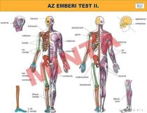 Az emberi test II.