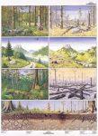 Veszélyeztetett természet 1-2 DUO