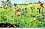 A mező életközössége (fóliás-fémléces)