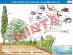 Vizek, vízpartok növénytársulásai, táplálkozási kapcsolatai