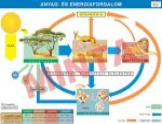 Anyag és energiaforgalom