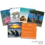 Állatos kártyák beszédfejlesztéshez